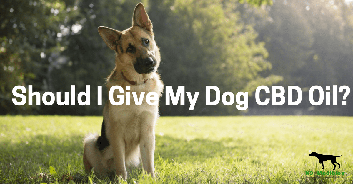 CBD oil for dogs, CBD for dogs, CBD oil benefits, CBD oil and dogs, canine companion tinctures