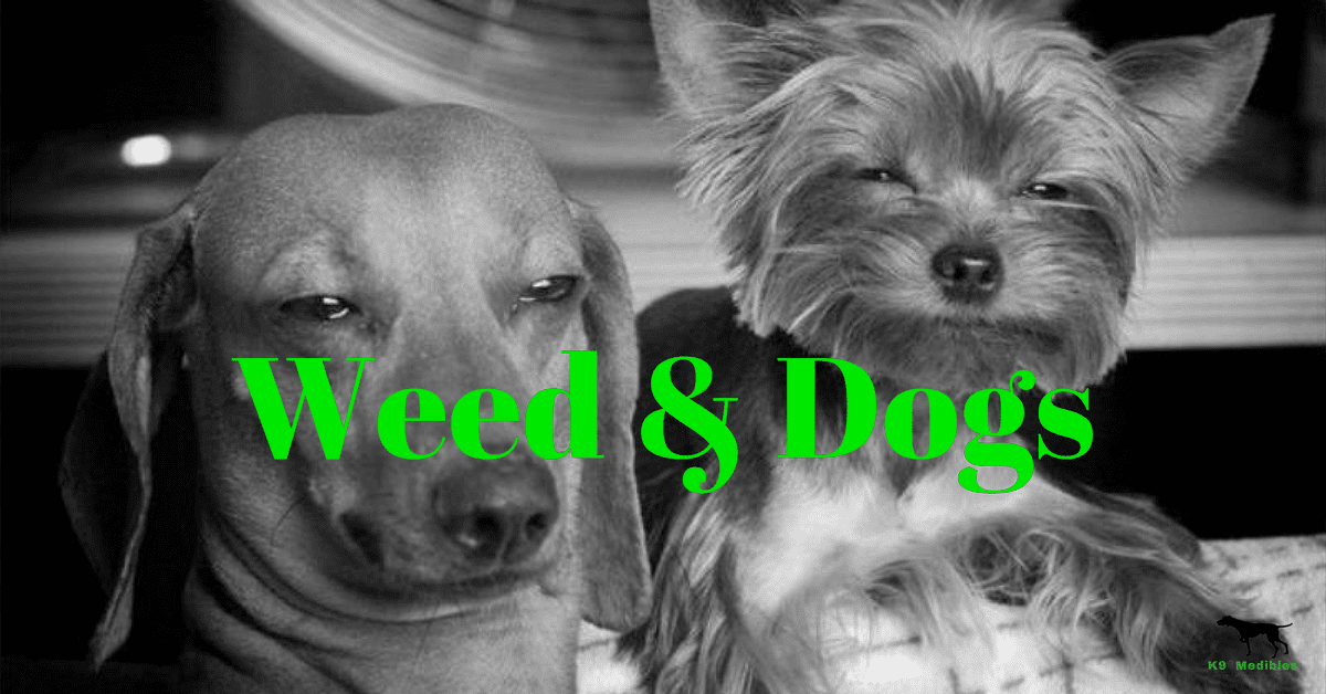 Weed & dogs. Is weed bad for dogs? Is weed good for dogs?