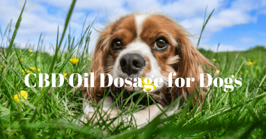 CBD Dosage For Dogs – How Much CBD Oil For My Dog?