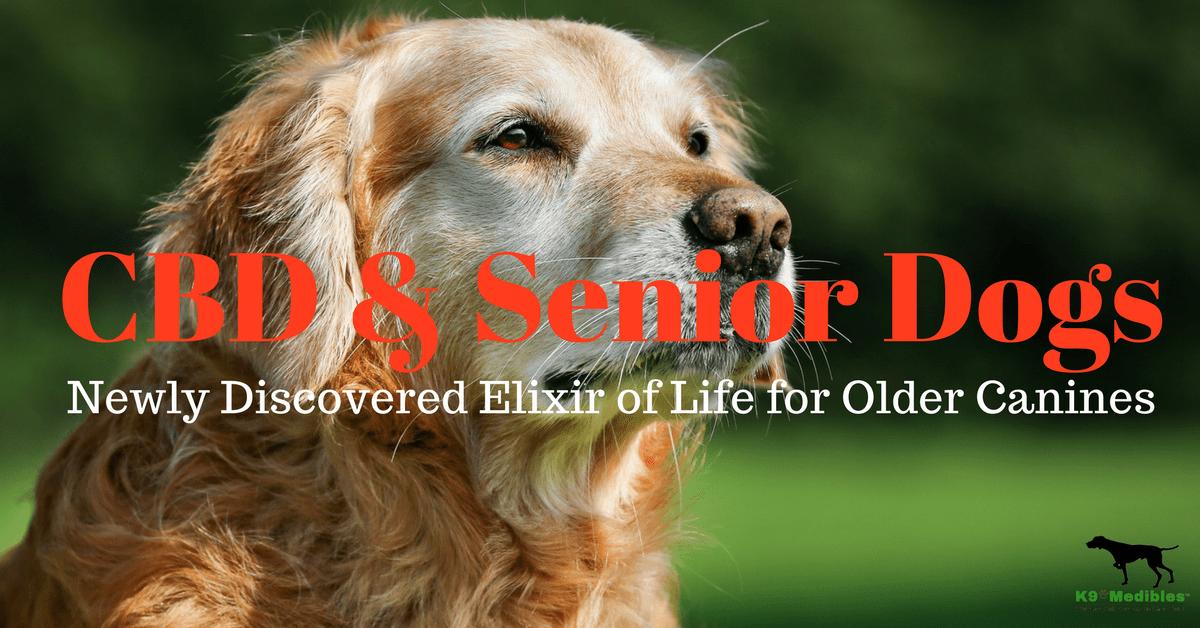 Is CBD good for dogs? CBD for senior dogs