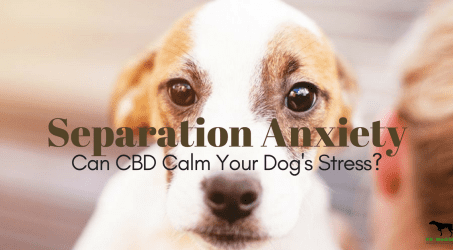 Dog With Anxiety Separation – Curing dog separation anxiety quickly!
