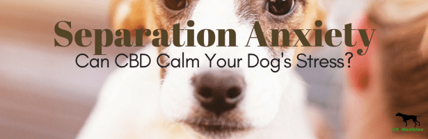 Dogs With Anxiety Separation – CBD For Dogs With Anxiety