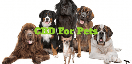 CBD For Pets 2020 Buyers Guide