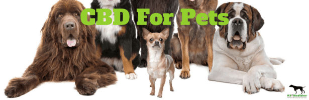 Hemp Pet Treat Dangers
