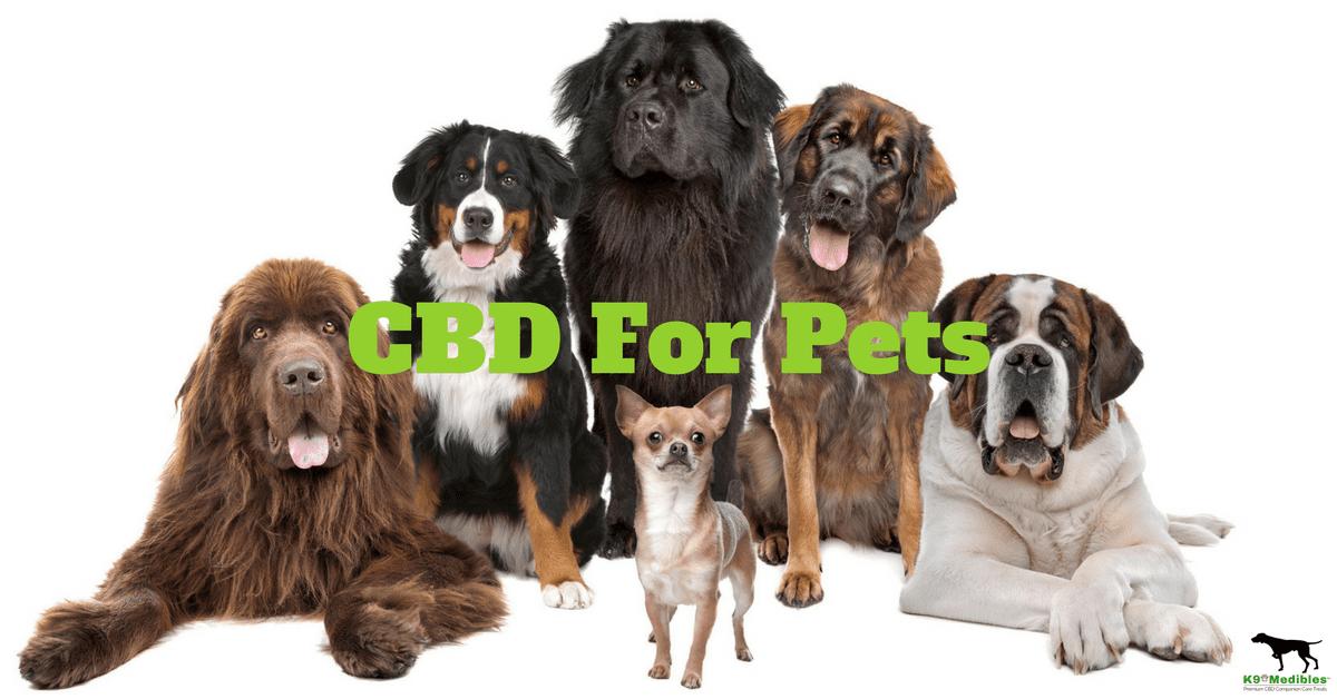 cbd for pets. cbd for dogs. cbd dosage for dogs. How to choose a CBD product for your dog