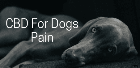 Is CBD Good For A Dog With Pain?