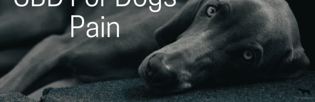 CBD For Dogs Pain Relief
