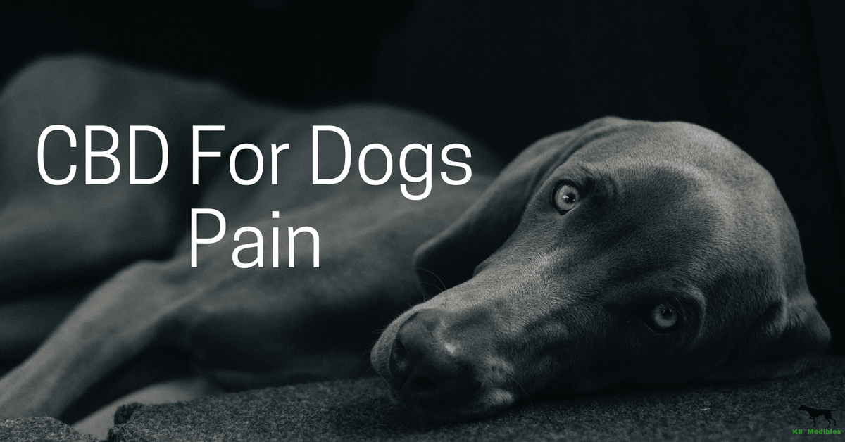 CBD for dogs pain. CBD oil for dogs pain. CBD oil for dogs joint pain. CBD for dogs with joint pain. CBD for dogs pain relief. CBD for dogs in pain. CBD oil for dogs in pain. CBD for pets.