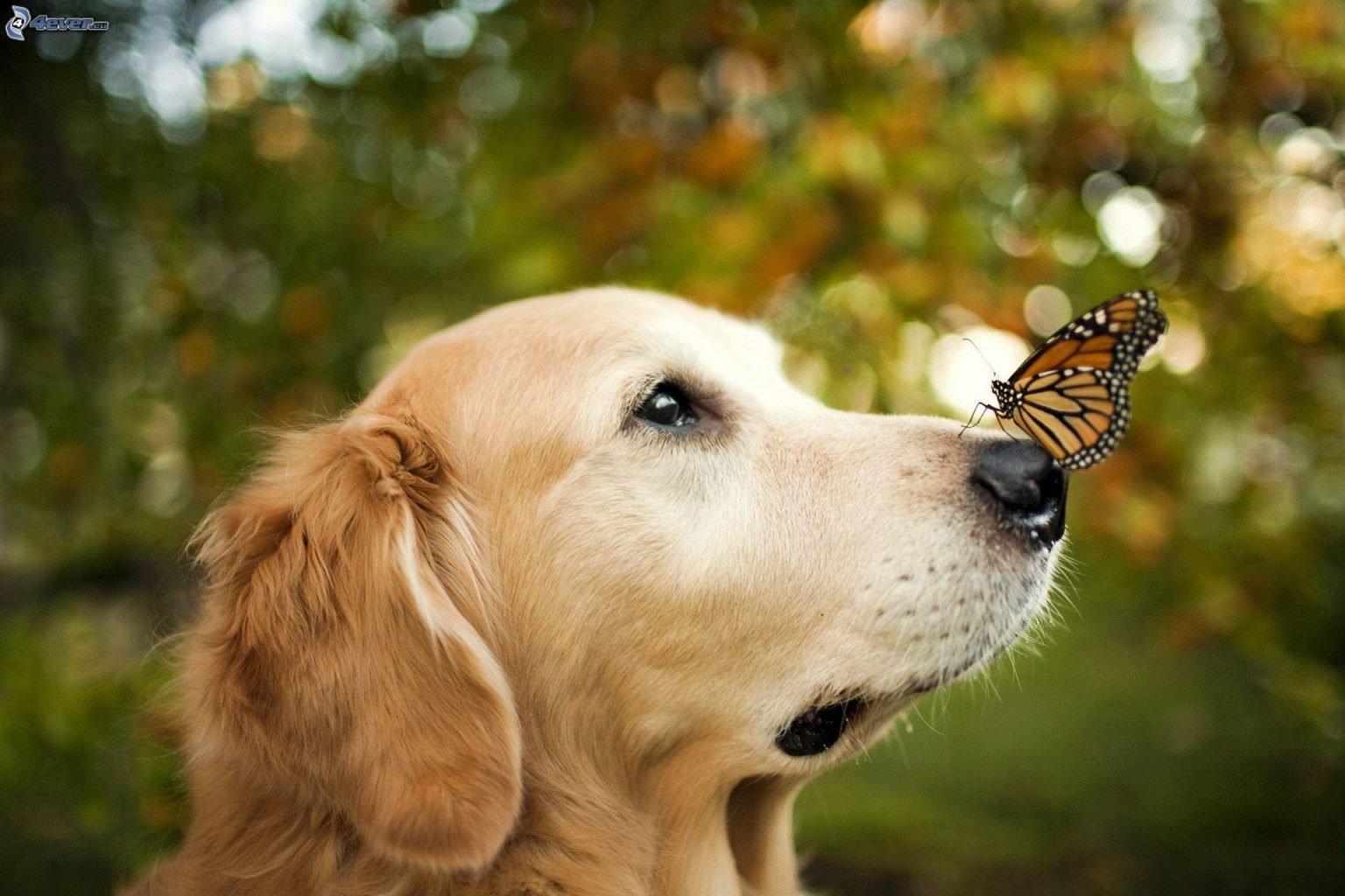 CBD for dog seizures