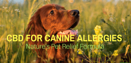 Can Dogs Have Allergies? Is CBD Good For Dogs With Allergies Symptoms