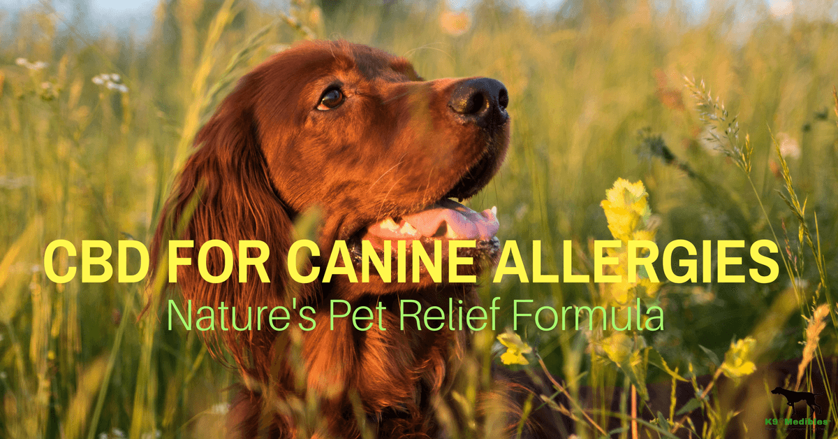 CBD for dogs allergies. CBD for dogs with allergies. CBD oil for dogs with allergies.