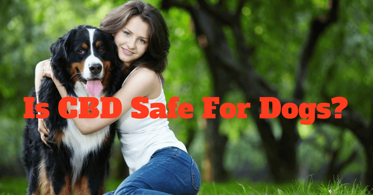 CBD oil for dogs. Is CBD safe for dogs?