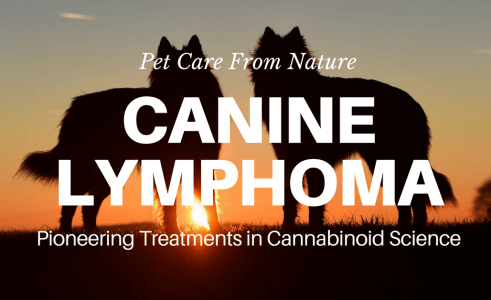 Lymphoma In Dogs – Signs Of Lymphoma In Dogs