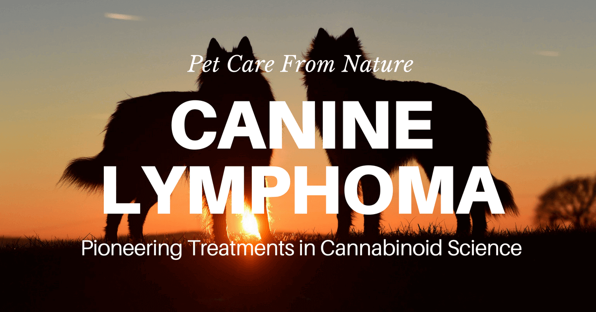 Lymphoma in Dogs. Lymphoid cancer in dogs.