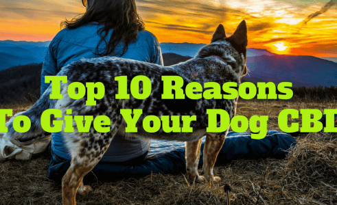 CBD For Dogs – Top 10 Reasons to Give Your Dog CBD Oil