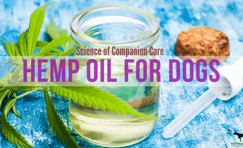 Can Dogs Have Hemp Oil