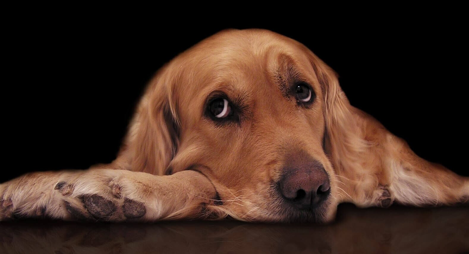 Hemp oil for dogs benefits