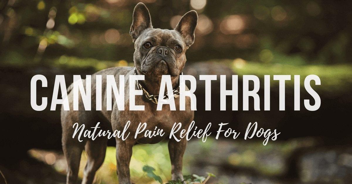 Canine arthritis.