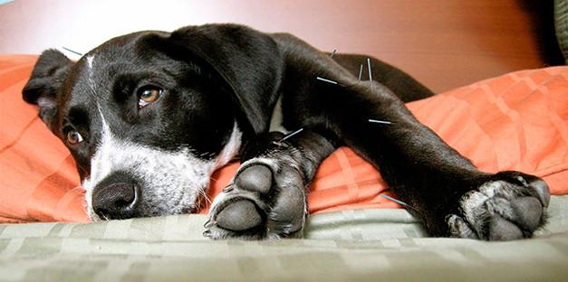treatment for hip dysplasia in dogs