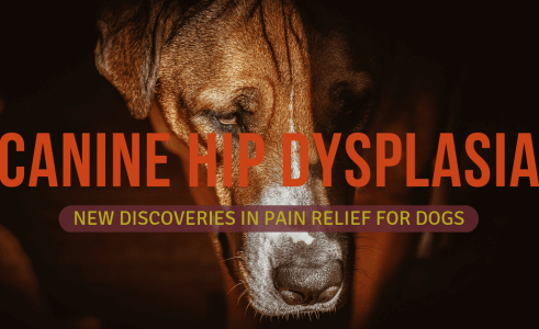 Hip Dysplasia Treatment for Dogs