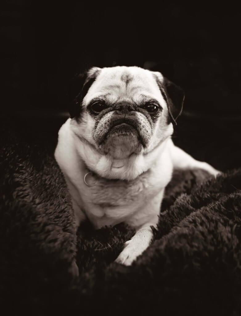 Symptoms of aging in dogs