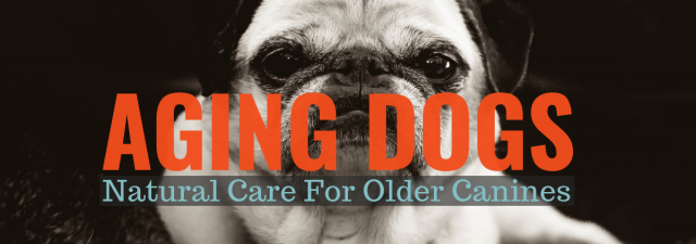 Aging Dogs