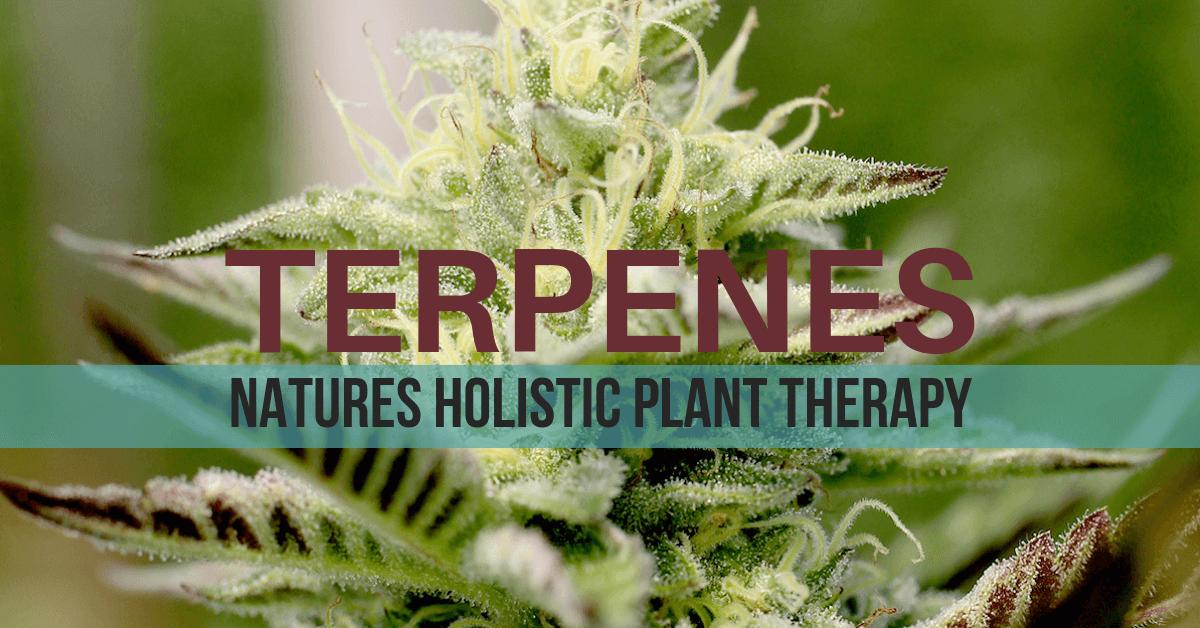 Terpenes, list of terpenes, cannabis terpenes, hemp terpenes. terpenes chart,