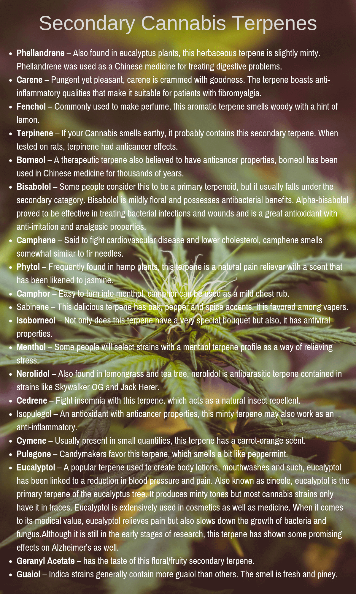 Terpens list of secondary terpenes in cannabis