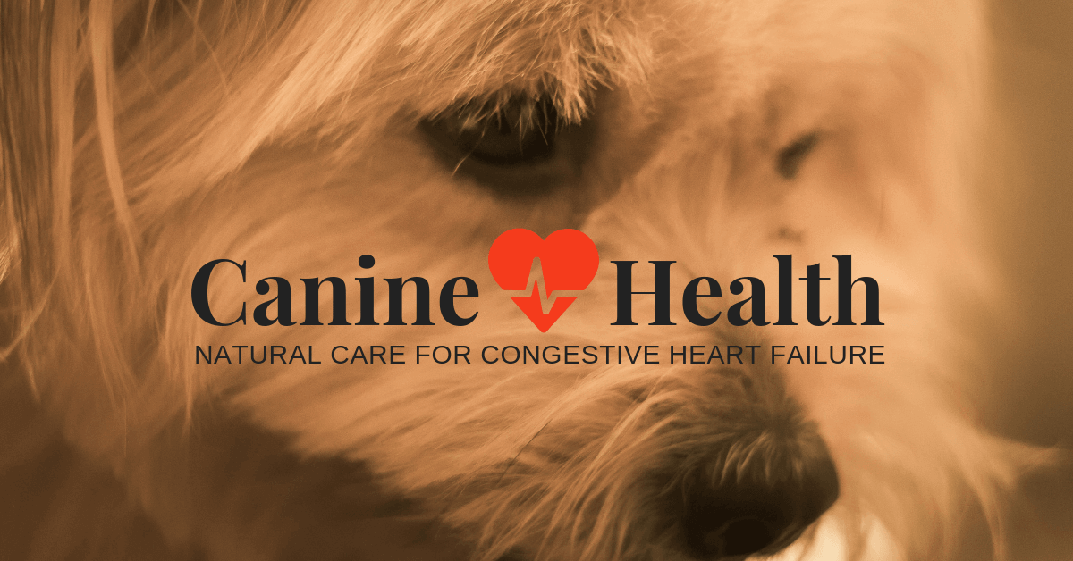 Congestive Heart failure on dogs.