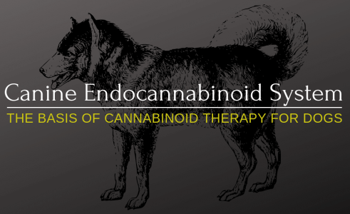 Endocannabinoid System – What Is Endocannabinoid System?