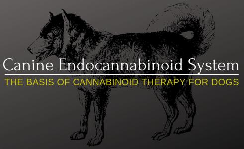 Endocannabinoid System: What Is Endocannabinoid System?