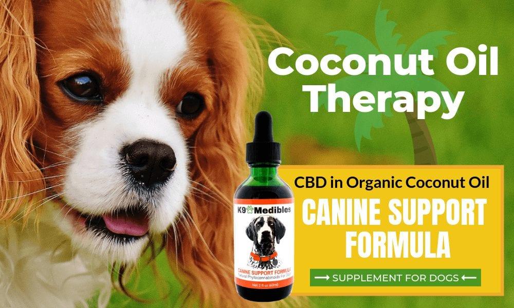 Coconut oil for dogs. Coconut oil for dogs benefits.