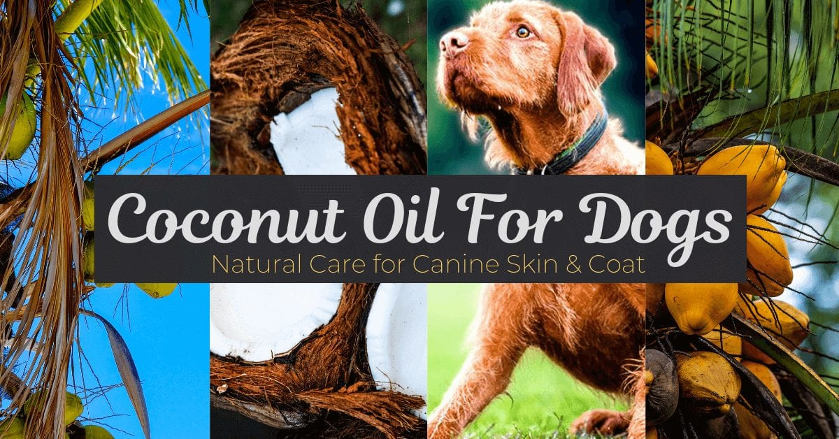 Coconut oil for dogs benefits
