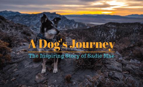 Sadie Mae's Story
