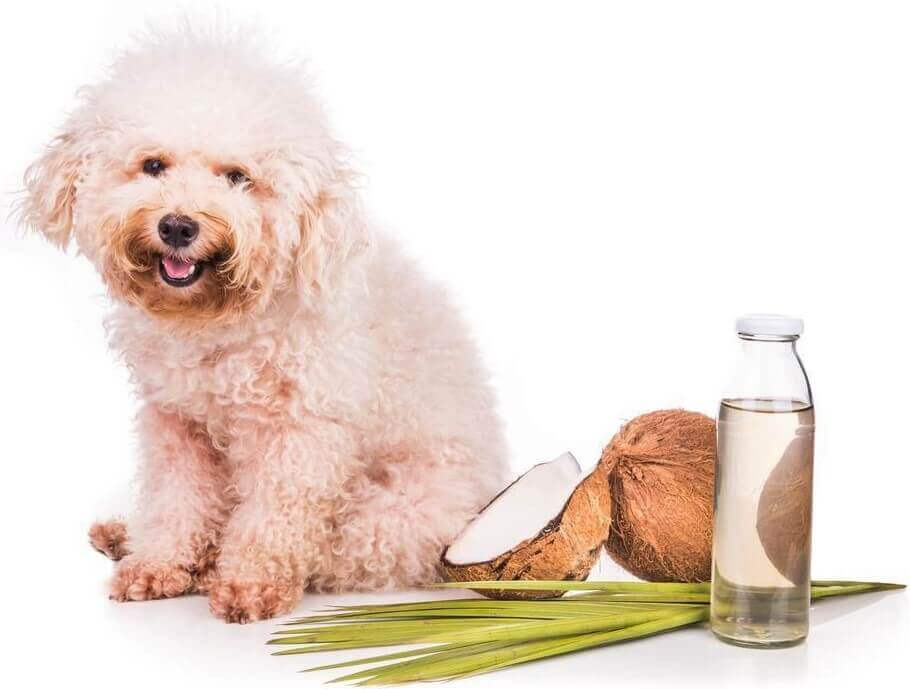Coconut oil for dogs how much