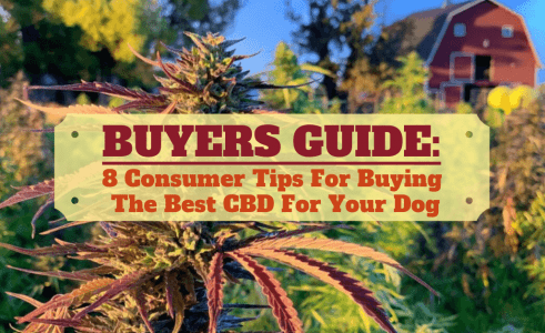 Best Hemp Oil For Dogs? [2020 Buyers Guide]