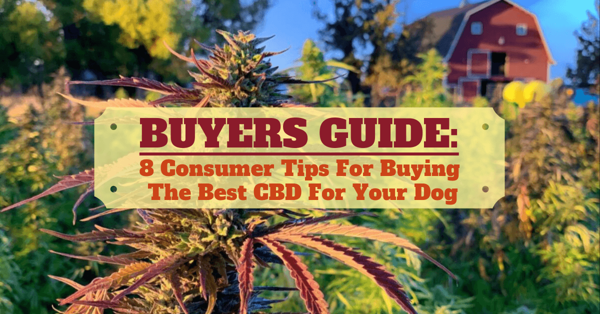 Best hemp oil for dogs