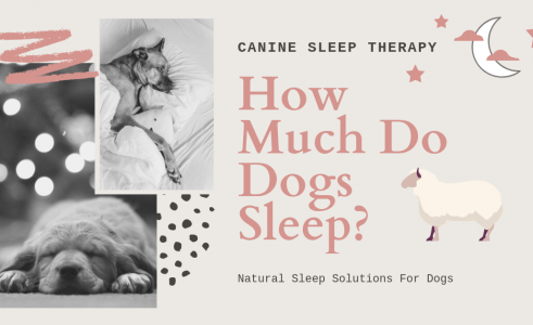 How Many Hours Do Dogs Sleep a Day?