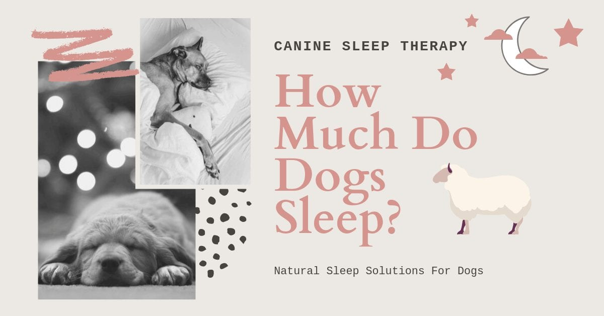 How many hours do dogs sleep a day
