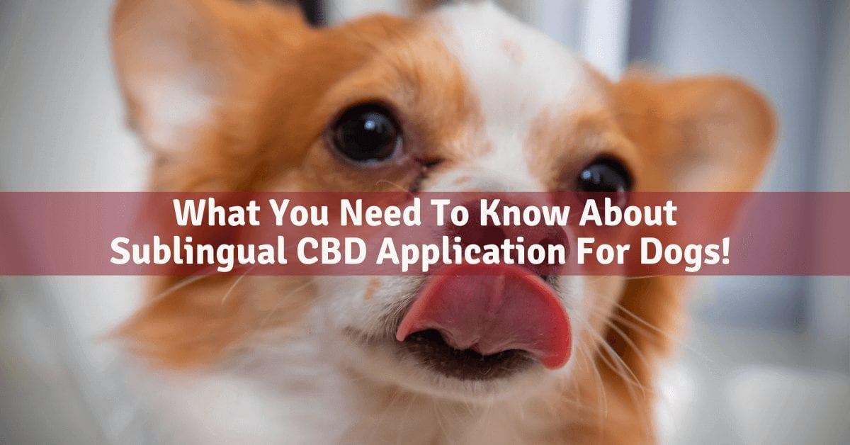 Sublingual CBD application