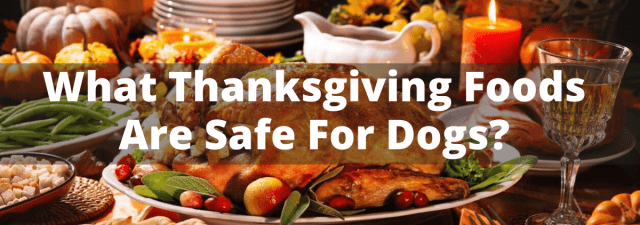 What Thanksgiving Foods Are Safe For Dogs