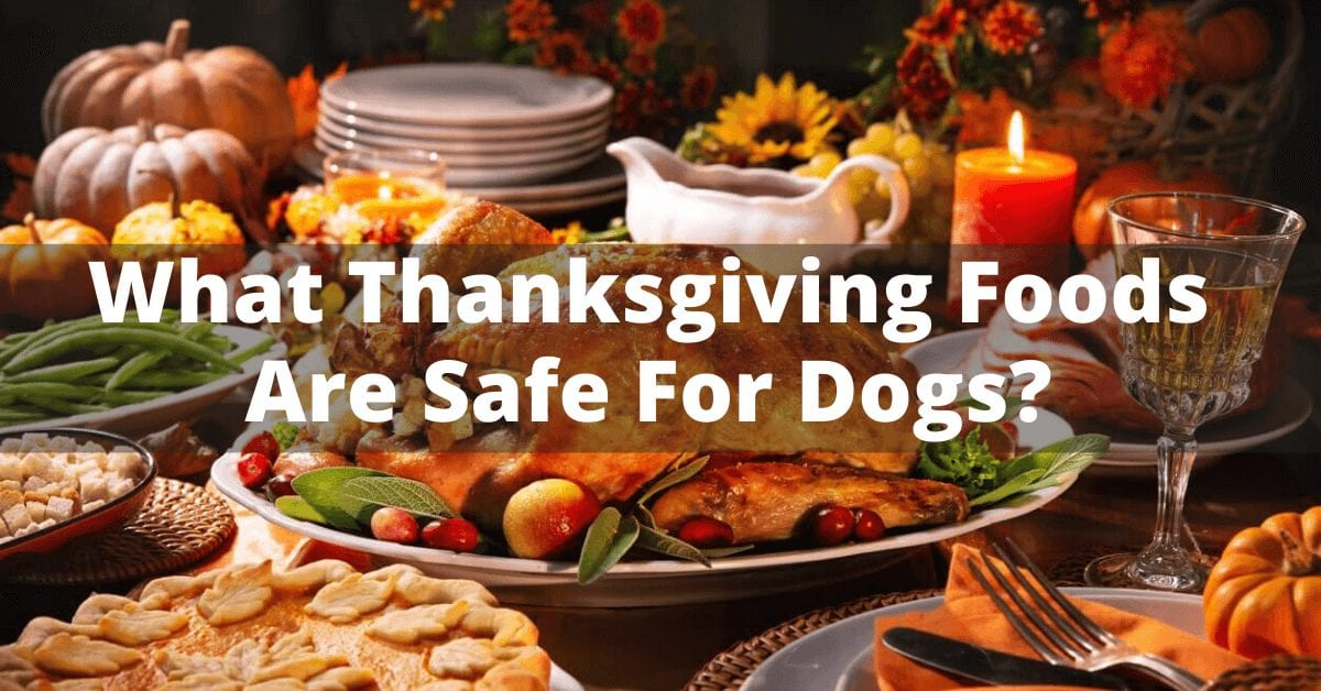 What thanksgiving day foods are safe for dogs