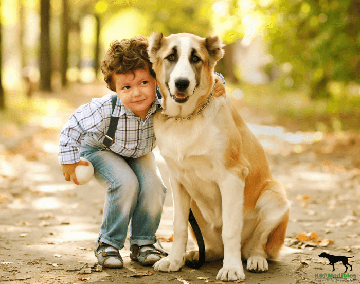 CBD for pets. How to choose a CBD oil for your dog. CBD for dogs. Canine companion treats. cannabis for dogs. CBD dog treats. CBD tincture for dogs.