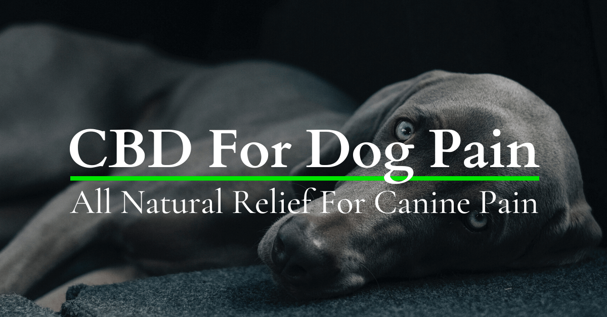 cbd oil for dogs pain