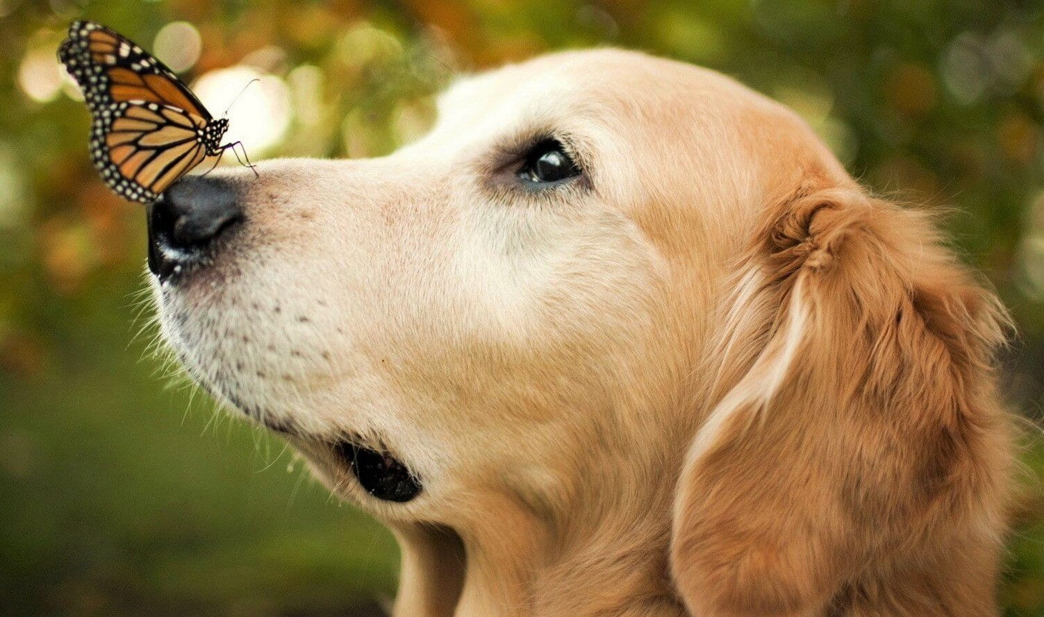 natural treatment for dogs seizures