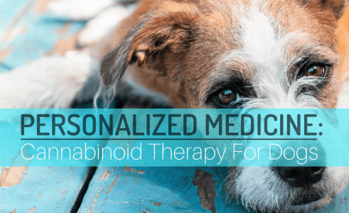 Cannabinoid Therapy For Dogs