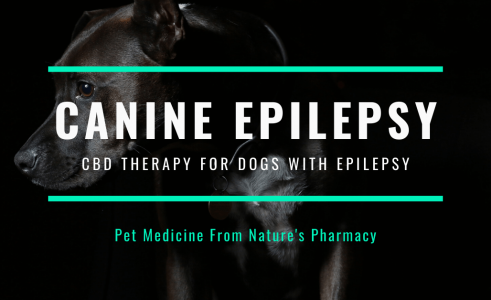 Dogs With Epilepsy – Canine Epilepsy Treatment Options
