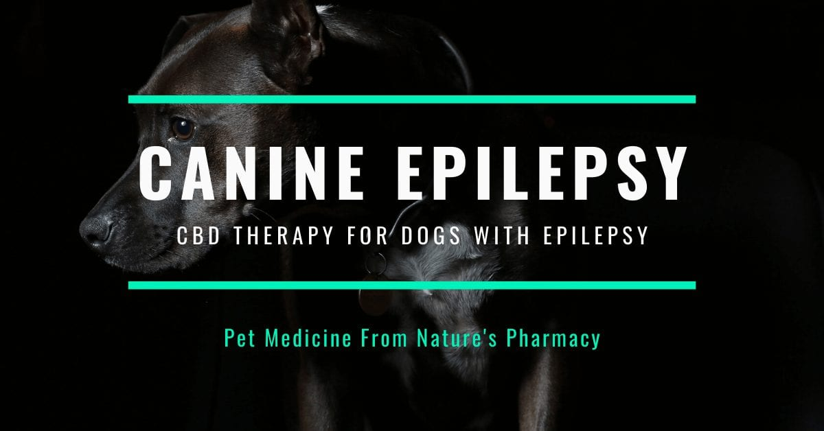 Dogs with epilepsy. Canine epilepsy - CBD oil for dogs with epilepsy