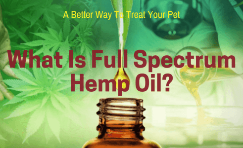What Is Full Spectrum Hemp Oil?
