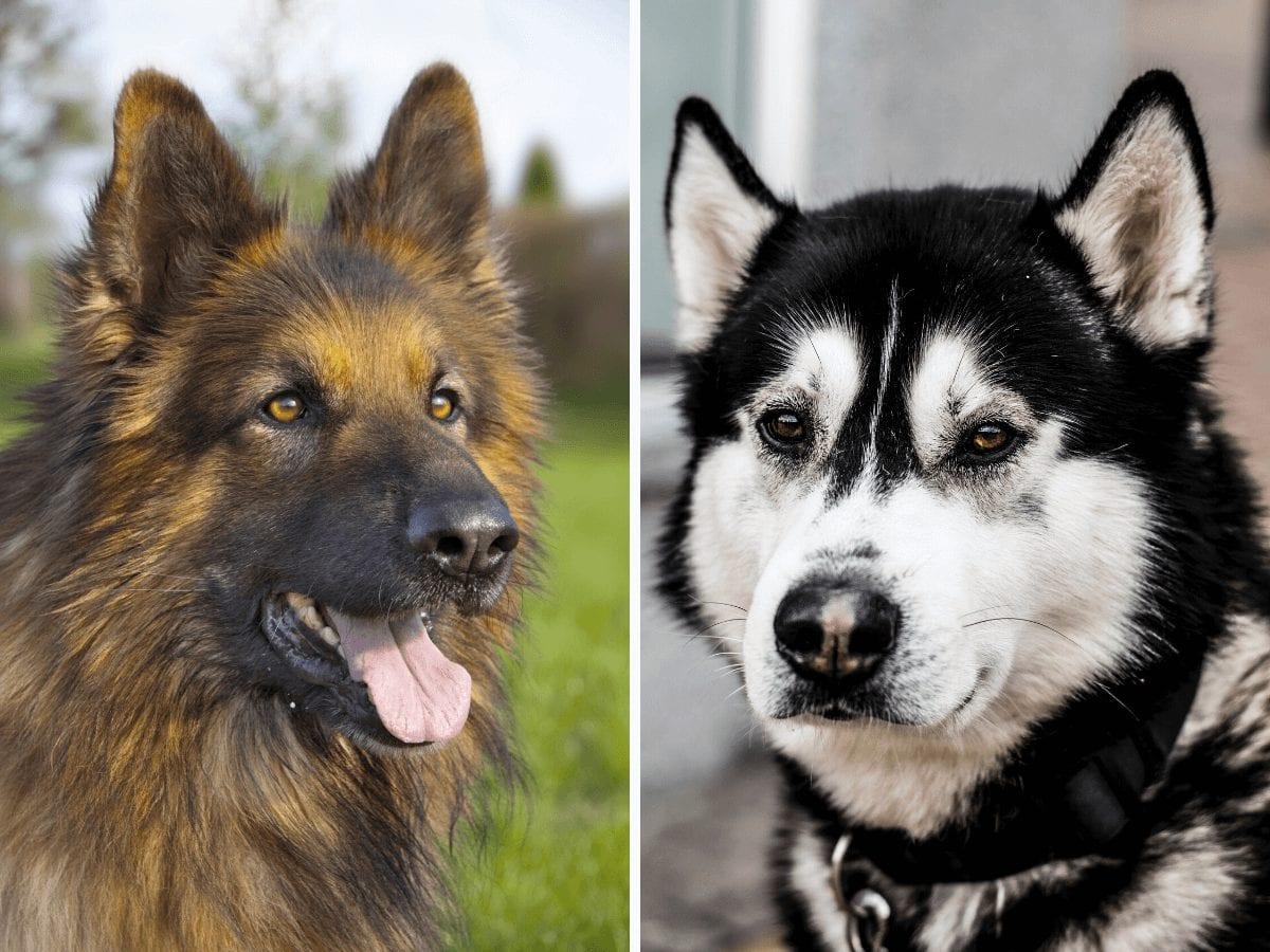 Is canine epilepsy hereditary?